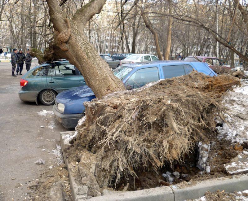 """Курс """"Инструментальная диагностика деревьев"""""""