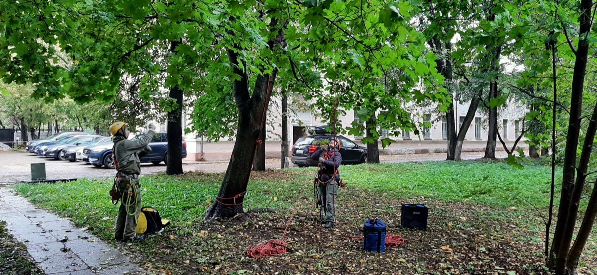 В сентябре в Московской школе ухода за деревьями прошел очередной курс для арбористов «Арбористика. Работа на деревьях с помощью канатной техники»